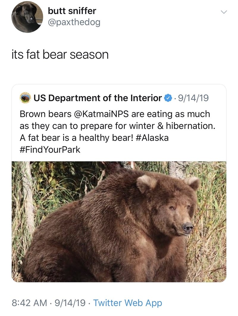 Vertebrate - butt sniffer @paxthedog its fat bear season US Department of the Interior 9/14/19 Brown bears @KatmaiNPS are eating as much as they can to prepare for winter & hibernation. A fat bear is a healthy bear! #Alaska #FindYourPark 8:42 AM 9/14/19 Twitter Web App