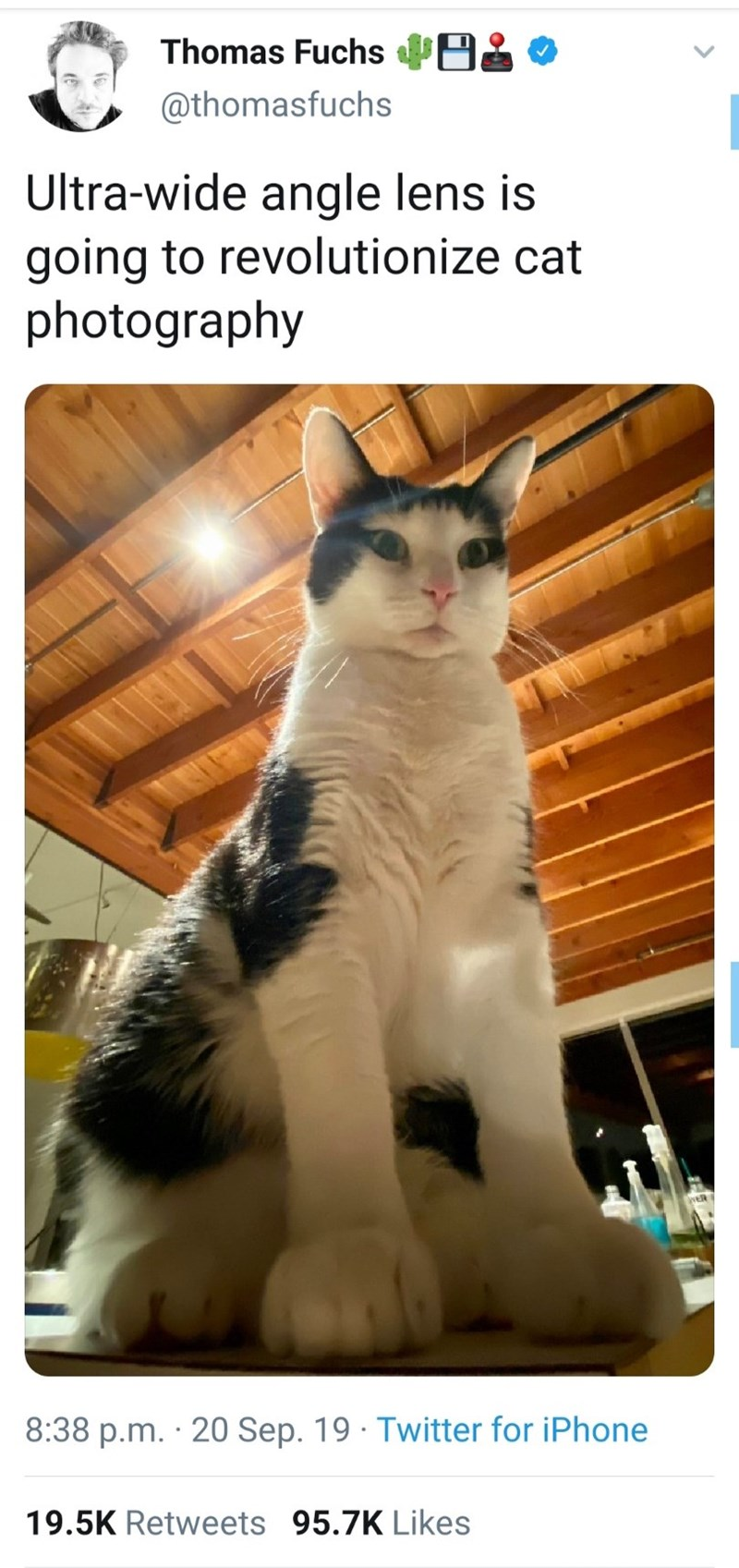 Cat - Thomas Fuchs @thomasfuchs Ultra-wide angle lens is going to revolutionize cat photography 8:38 p.m. 20 Sep. 19 Twitter for iPhone 19.5K Retweets 95.7K Likes