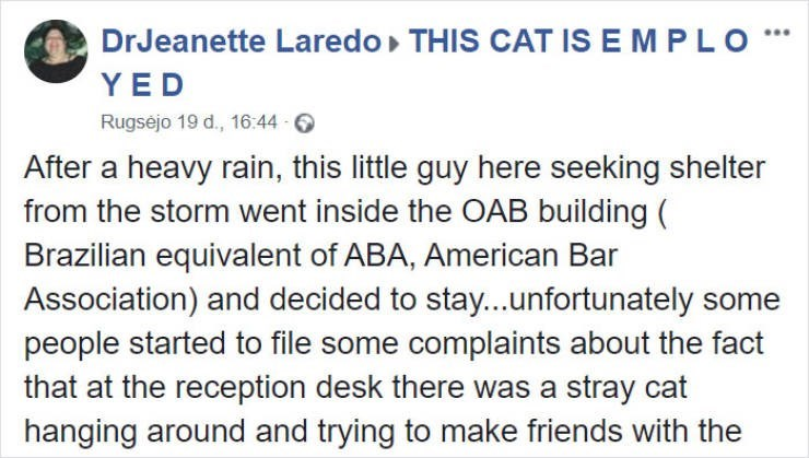 Text - DrJeanette Laredo THIS CAT IS E M PLO YED Rugsejo 19 d., 16:44 After a heavy rain, this little guy here seeking shelter from the storm went inside the OAB building ( Brazilian equivalent of ABA, American Bar Association) and decided to stay...unfortunately some people started to file some complaints about the fact that at the reception desk there was a stray cat hanging around and trying to make friends with the