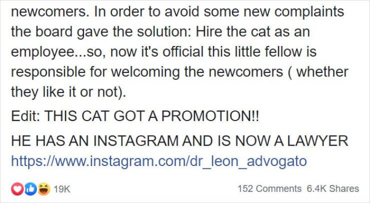 Text - newcomers. In order to avoid some new complaints the board gave the solution: Hire the cat as an employe...so, now it's official this little fellow is responsible for welcoming the newcomers (whether they like it or not) Edit: THIS CAT GOT A PROMOTION!! HE HAS AN INSTAGRAM AND IS NOW A LAWYER http://www.instagram.com/dr_leon_advogato 152 Comments 6.4K Shares 19K