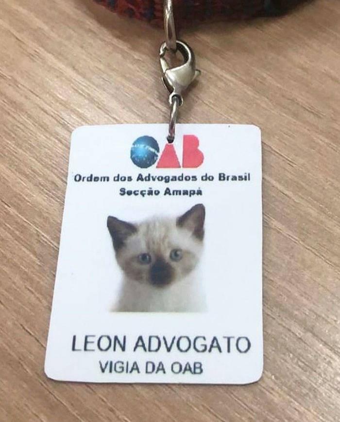 Cat - AB Ordem dos Advogados do Brasil Secção Amapa LEON ADVOGATO VIGIA DA OAB