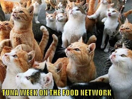 Cat - TUNA WEEK ON THE FOOD NETIWORK
