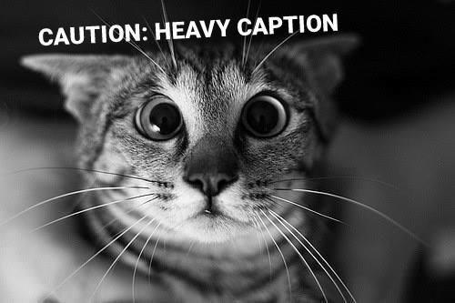 Cat - CAUTION: HEAVY CAPTION