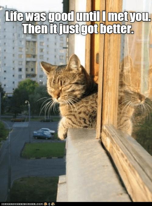 Cat - Life was good untill met you. Then itjust got better. IORNHASOHEE2BUR GER0OM