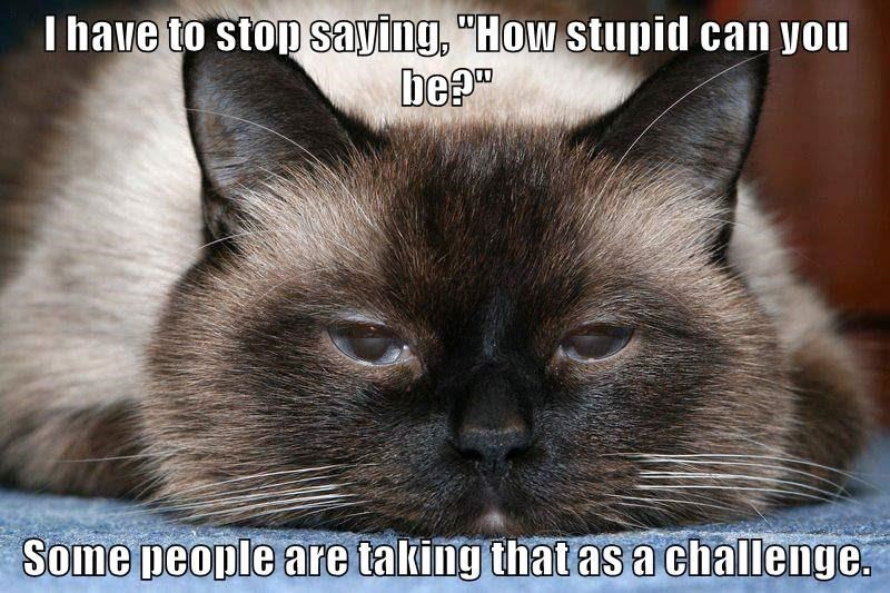 """Cat - I have to stop saying, """"How stupid can you be?"""" Some people are taking that as achallenge."""