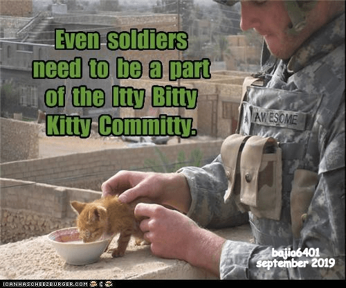 Adaptation - Even soldiers need to be a part of the Ity Bitty Kitty Committy. AWESOME bajio6401 september 2019 CANHASCHEE2EURGER cOM
