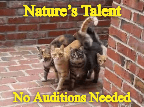Cat - Nature's Talent No Auditions Needed