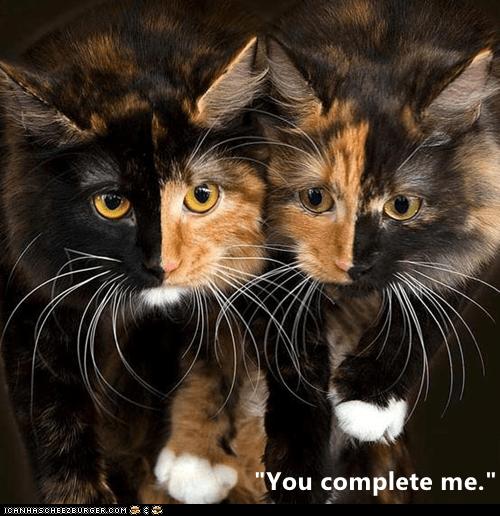 """Cat - """"You complete me."""" ICANHASCHEE2E0RGER CoM"""