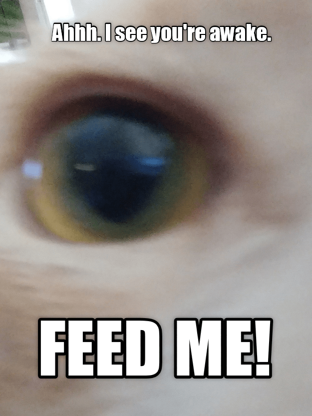 Eye - Ahhh.Isee you're awake. FEED ME!