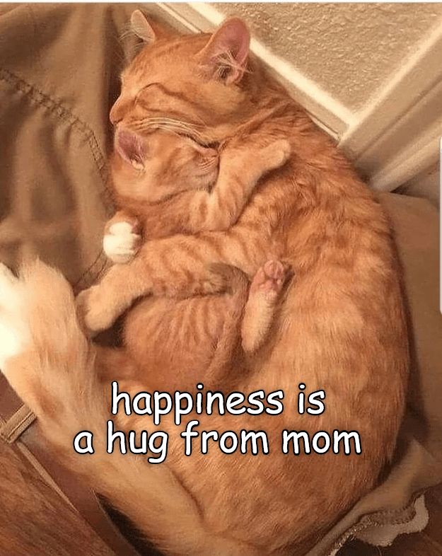 Cat - happiness is a hug from mom