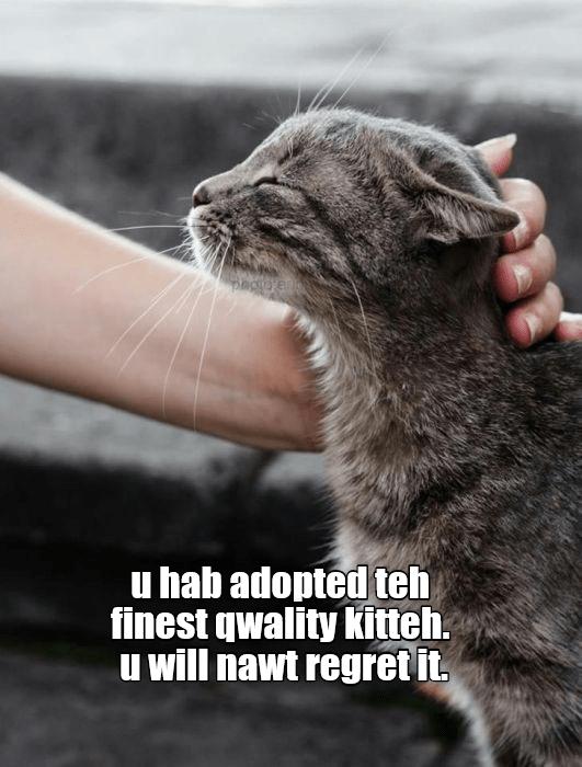 Cat - u hab adopted teh finest qwality kitteh. u will nawt regret it