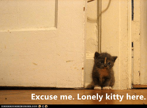 Text - Excuse me. Lonely kitty here. CANHASCHEE2EURGER cOM
