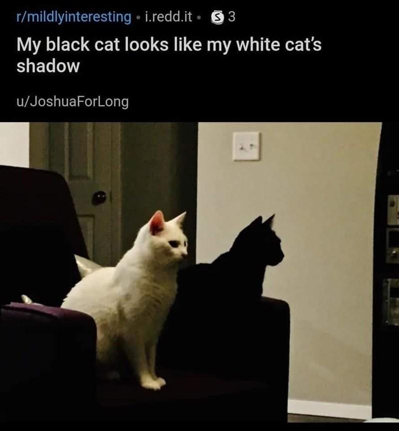 cat memes - 9364134912
