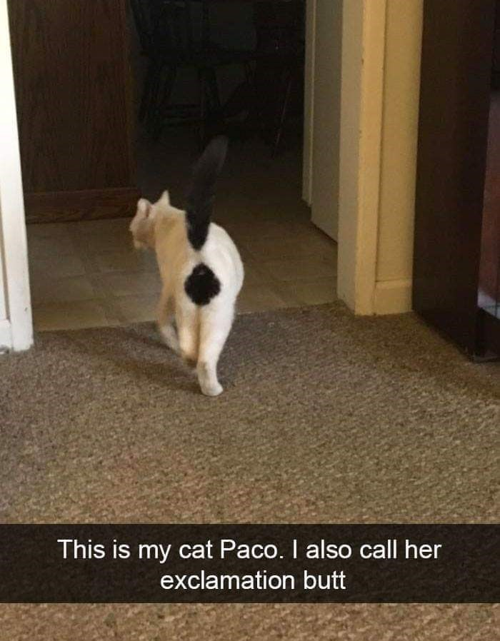 Cat - This is my cat Paco. I also call her exclamation butt