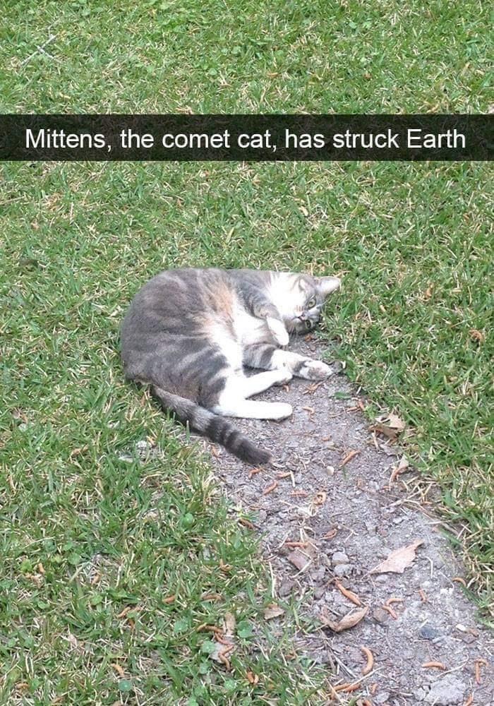 Grass - Mittens, the comet cat, has struck Earth