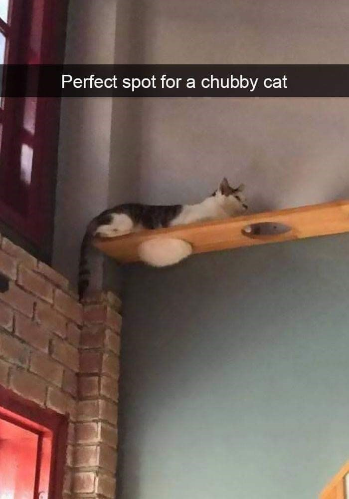 Ceiling - Perfect spot for a chubby cat