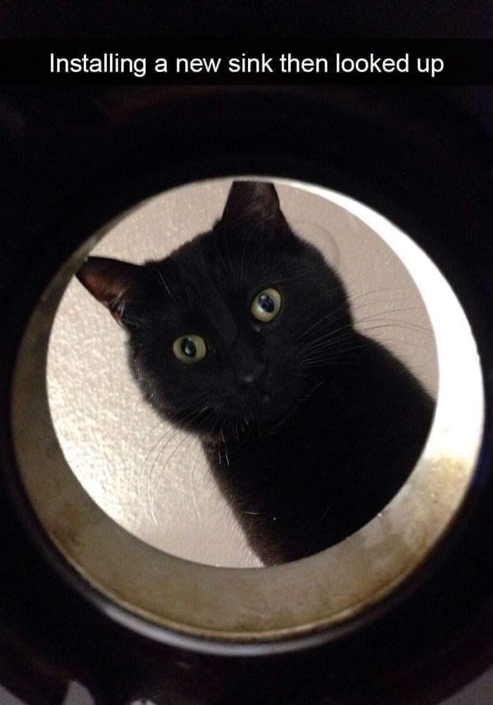 Cat - Installing a new sink then looked up