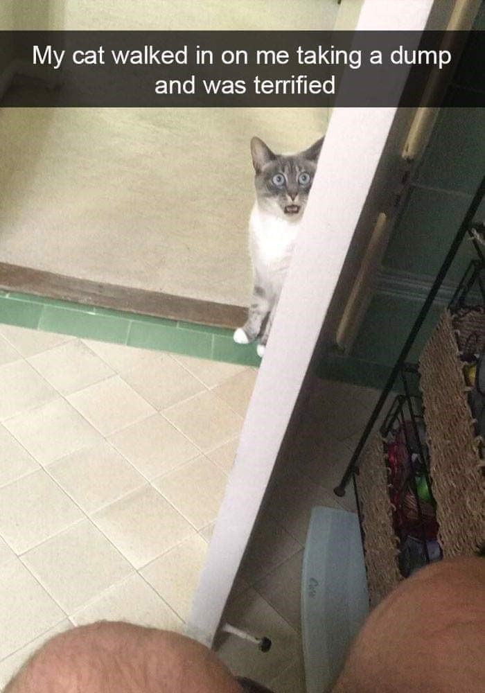 Cat - My cat walked in on me taking dump a and was terrified