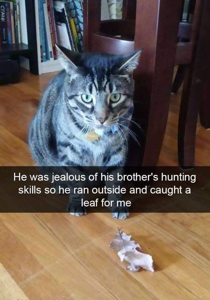 Cat - He was jealous of his brother's hunting skills so he ran outside and caught a leaf for me CTANK