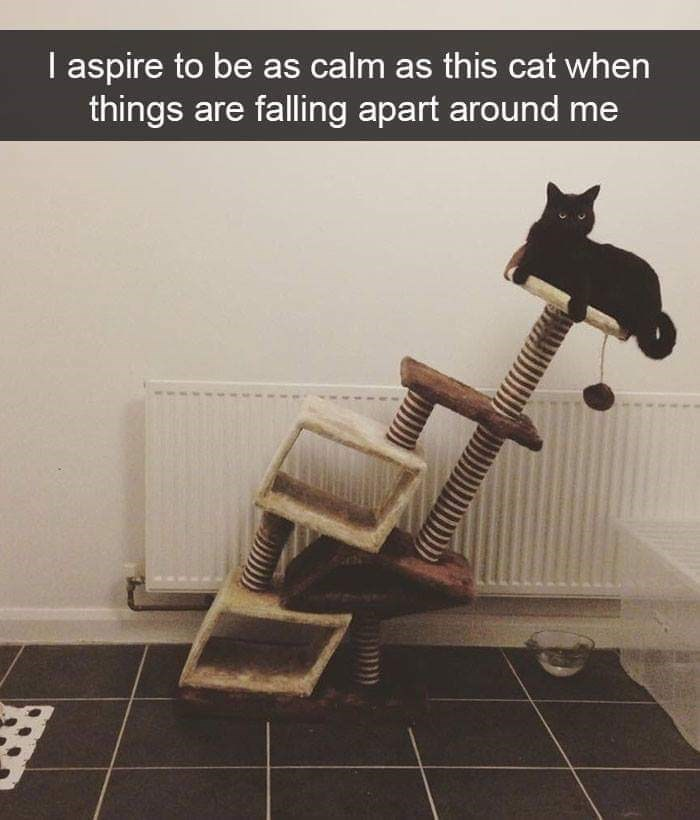 Cat - I aspire to be as calm as this cat when things are falling apart around me