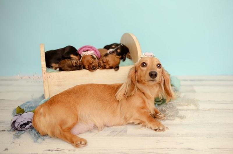 Dog - PHOTOGRAPH