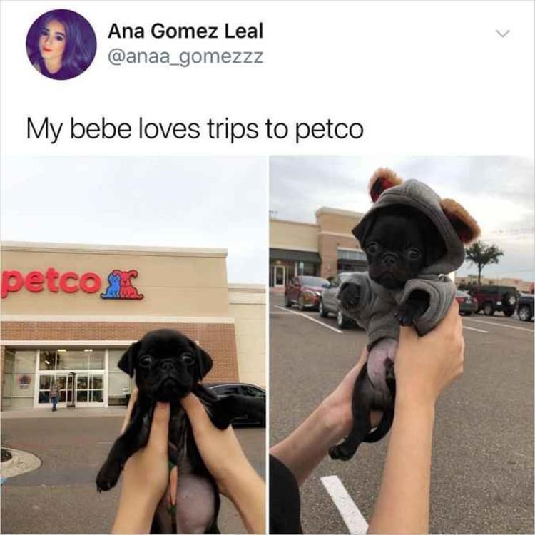 Shoulder - Ana Gomez Leal @anaa_gomezzz My bebe loves trips to petco petco
