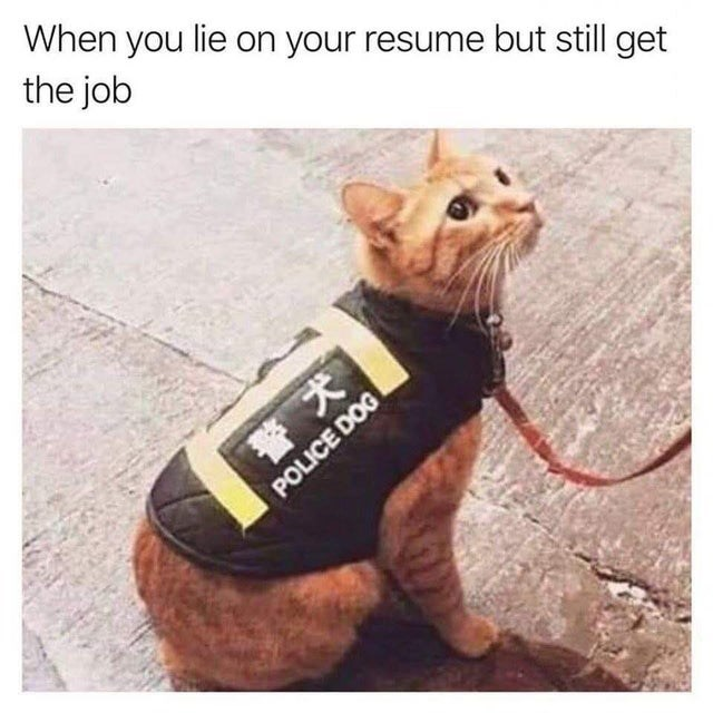 Dog clothes - When you lie on your resume but still get the job POLICE DOG