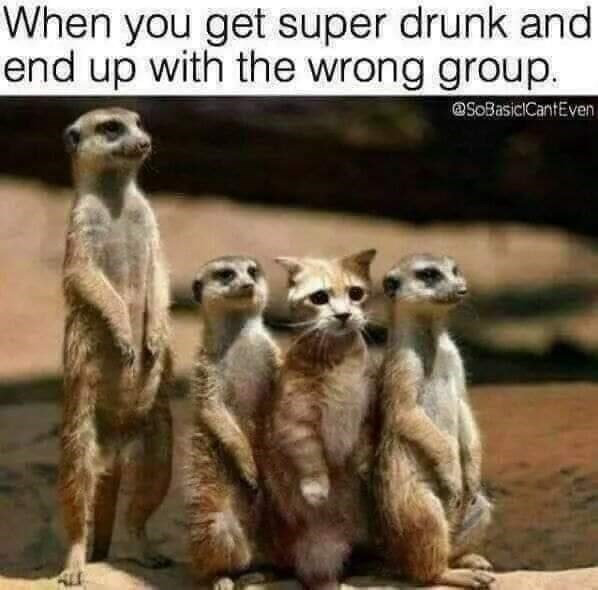 Meerkat - When you get super drunk and end up with the wrong group @SoBasiciCantEven