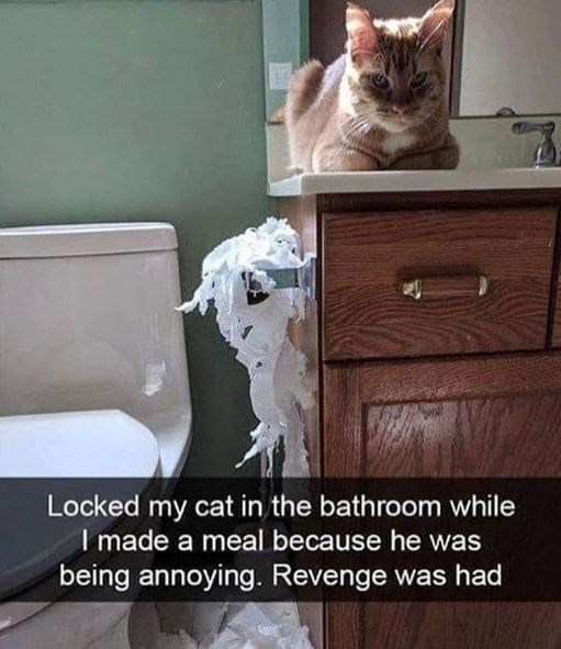 Cat - Locked my cat in the bathroom while I made a meal because he was being annoying. Revenge was had