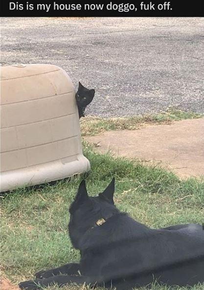 Cat - Dis is my house now doggo, fuk off.