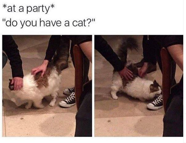 """Cat - *at a party* """"do you have a cat?"""" w"""