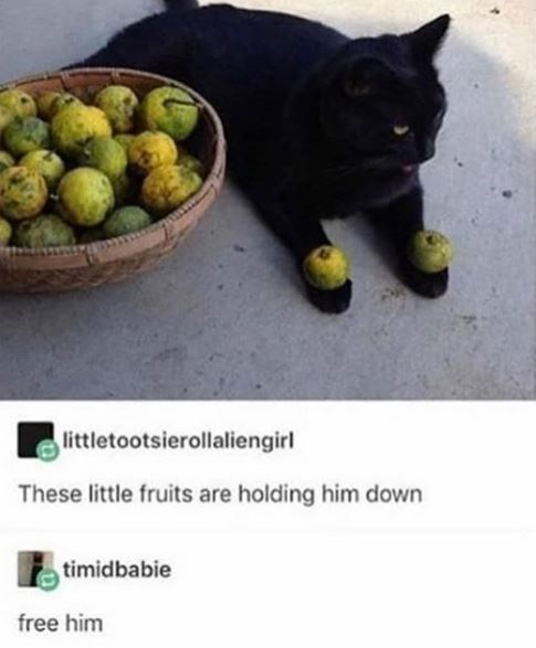 Cat - littletootsierollaliengirl These little fruits are holding him down timidbabie free him