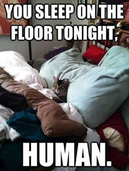 Photo caption - YOU SLEEP ON THE FLOOR TONIGHT HUMAN.