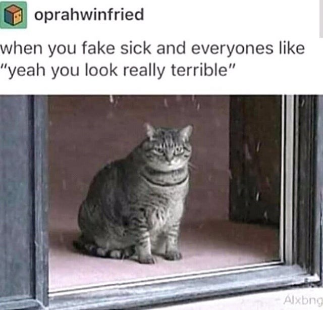 """Cat - oprahwinfried when you fake sick and everyones like """"yeah you look really terrible"""" Alxbng"""
