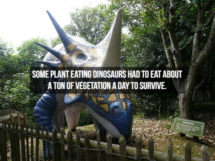 Dinosaur - SOME PLANT EATING DINOSAURS HAD TO EAT ABOUT A TON OF VEGETATION A DAY TO SURVIVE