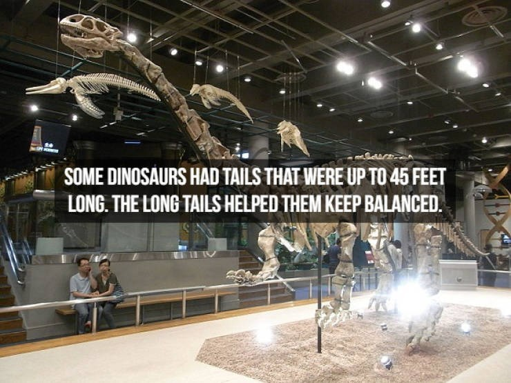 Dinosaur - SOME DINOSAURS HAD TAILS THAT WERE UP TO 45 FEET LONG. THE LONG TAILS HELPED THEM KEEP BALANCED.