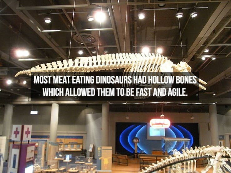 Ceiling - MOST MEAT EATING DINOSAURS HAD HOLLOW BONES WHICH ALLOWED THEM TO BE FAST AND AGILE