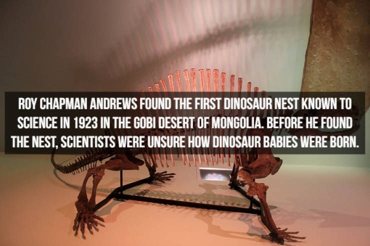 Text - ROY CHAPMAN ANDREWS FOUND THE FIRST DINOSAUR NEST KNOWN TO SCIENCE IN 1923 IN THE GOBI DESERT OF MONGOLIA. BEFORE HE FOUND THE NEST, SCIENTISTS WERE UNSURE HOW DINOSAUR BABIES WERE BORN.