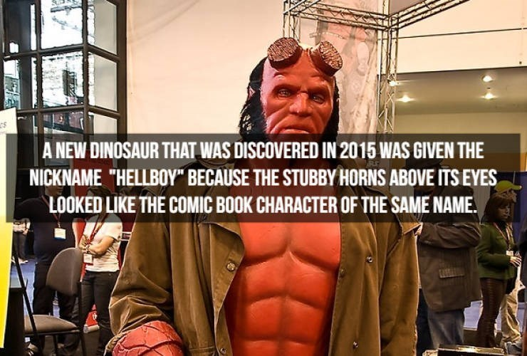 """Muscle - A NEW DINOSAUR THAT WAS DISCOVERED IN 2015 WAS GIVEN THE NICKNAME """"HELLBOY"""" BECAUSE THE STUBBY HORNS ABOVE ITS EYES LOOKED LIKE THE COMIC BOOK CHARACTER OF THE SAME NAME"""