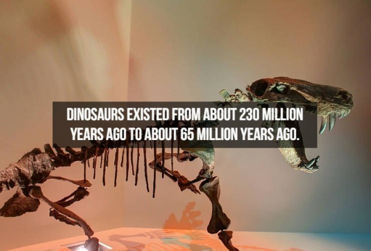 Extinction - DINOSAURS EXISTED FROM ABOUT 230 MILLION YEARS AGO TO ABOUT 65 MILLION YEARS AGO.