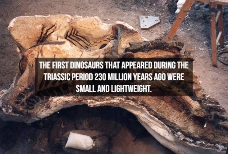 Tree - THE FIRST DINOSAURS THAT APPEARED DURING THE TRIASSIC PERIOD 230 MILLION YEARS AGO WERE SMALL AND LIGHTWEIGHT