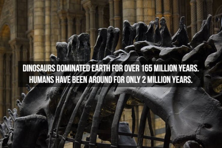 Font - DINOSAURS DOMINATED EARTH FOR OVER 165 MILLION YEARS. HUMANS HAVE BEEN AROUND FOR ONLY 2 MILLION YEARS.