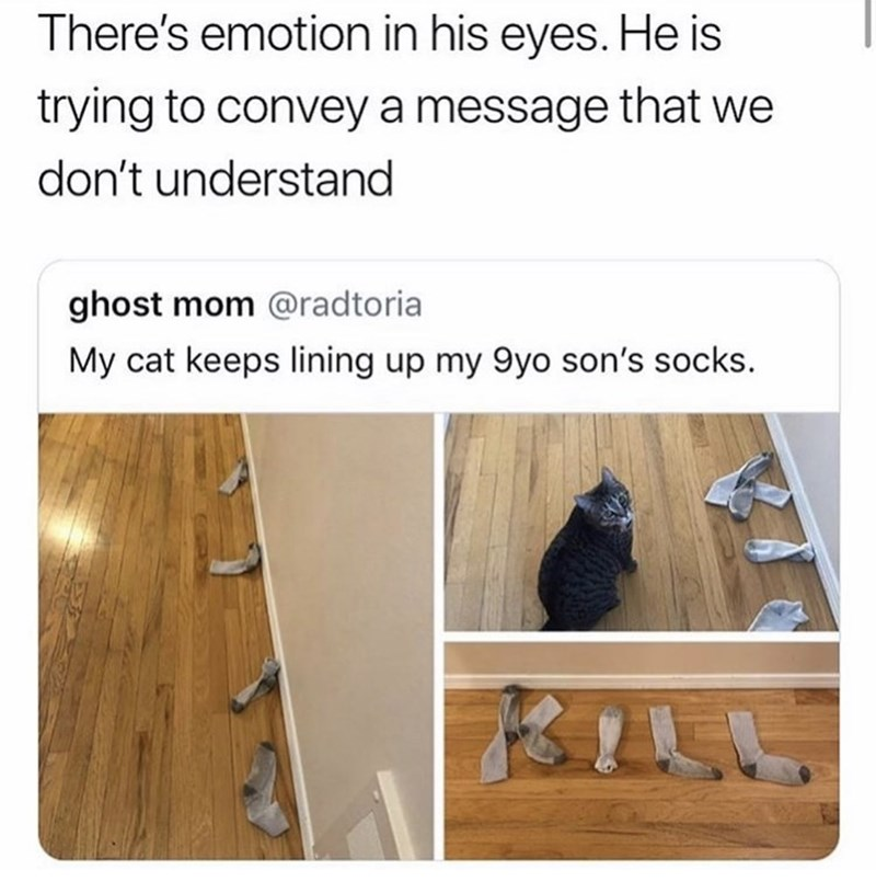 Wood - There's emotion in his eyes. He is trying to convey a message that we don't understand ghost mom @radtoria My cat keeps lining up my 9yo son's socks.