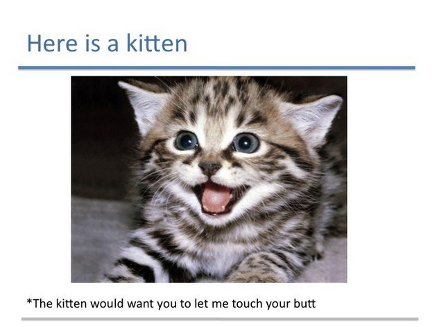 Cat - Here is a kitten *The kitten would want you to let me touch your butt