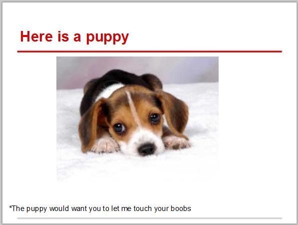 Dog - Here is a puppy *The puppy would want you to let me touch your boobs