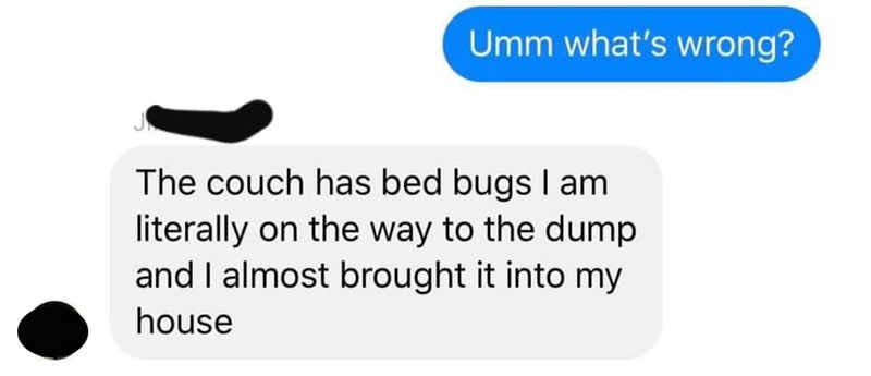 Text - Umm what's wrong? The couch has bed bugs I am literally on the way to the dump and I almost brought it into my house