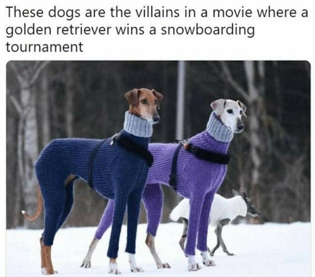 Dog - These dogs are the villains in a movie where a golden retriever wins a snowboarding tournament