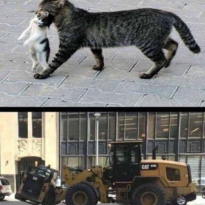 cat memes - 9364834048