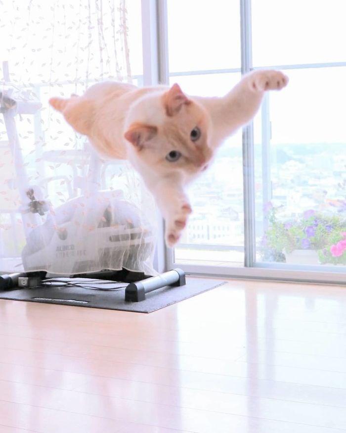 Cat - ALINCD