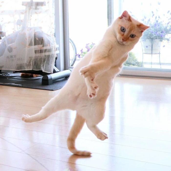 Cat - ALINCO